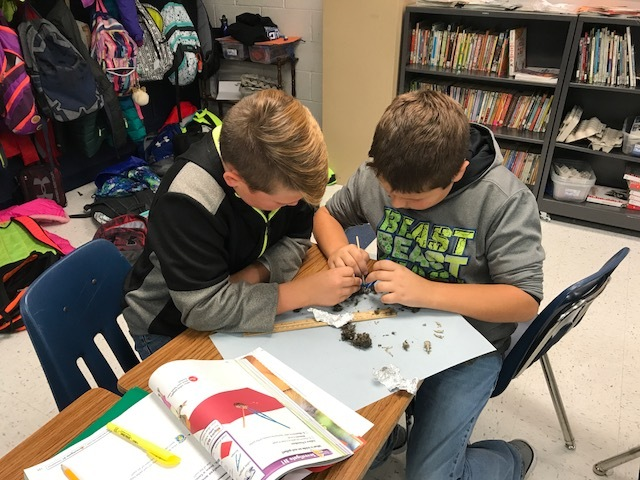 Mrs. E-Brown's Class Dissecting Owl Pellets